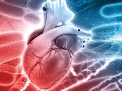 چکاپ قلب و یا چک علایم بیماری قلبی را در کجای برنامههای زندگیتان قرار دادهاید؟! | پزشکی